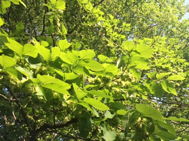 gröna blad på träd